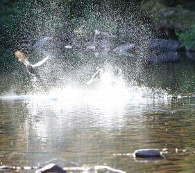 Ducks taking off