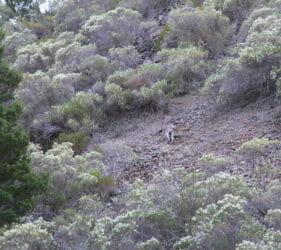 Roo in gorge in Spear Creek