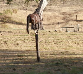 Horsing around standing on a pole