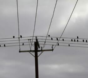 Birds composing their next song at Middleton Beach