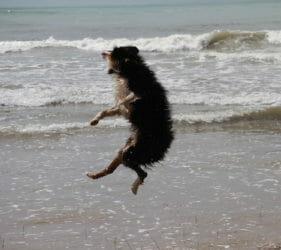 Rachel's dog Hugo doing flips on Middleton Beach